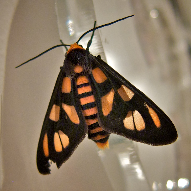 IMAGE: http://www.byrichard.com/photo/albums/userpics/10001/moth.jpg